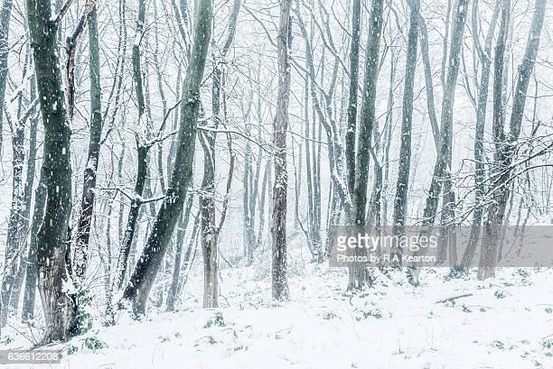 Enchanting snowy woodland