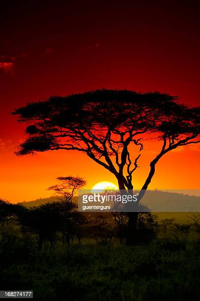 End of the day in the safari in Serengeti Africa