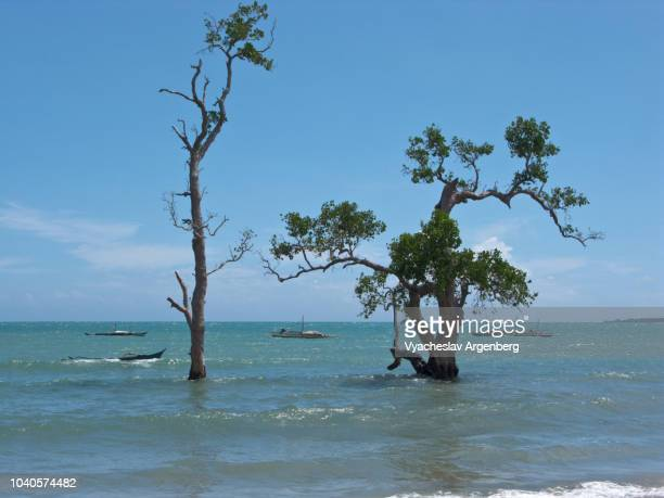 endemic trees rising out of the sulu sea, palawan seascape, remote location near the south verde island, philippines - argenberg stock pictures, royalty-free photos & images