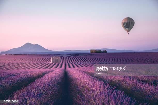 campo interminável de lavanda em provença, frança - provence alpes côte d'azur - fotografias e filmes do acervo