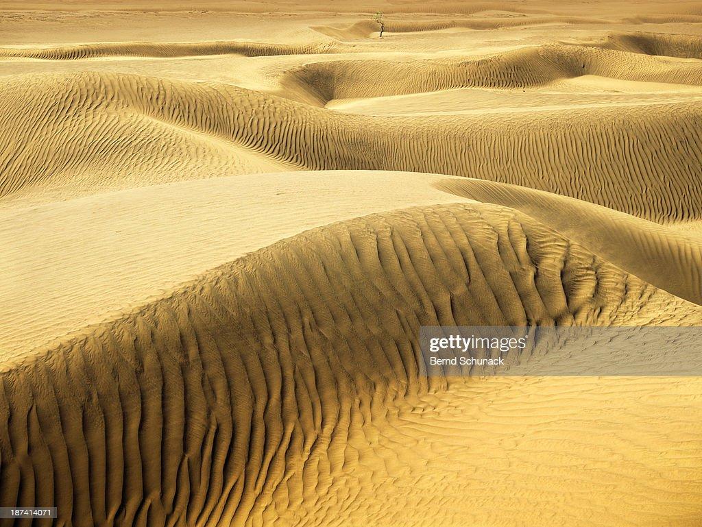 Endless Sahara Sand Dunes : Stock-Foto