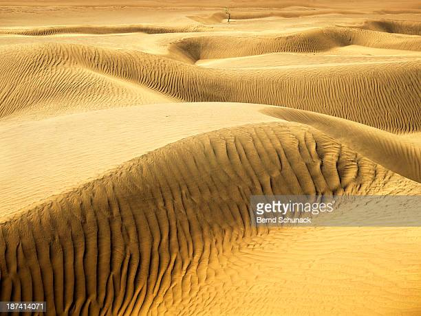 endless sahara sand dunes - bernd schunack photos et images de collection
