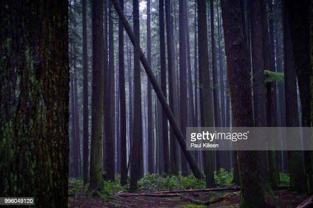 ubc endowment lands, vancouver b.c. - ubc stock pictures, royalty-free photos & images