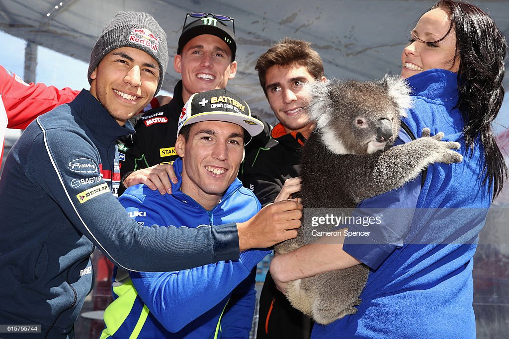Enea Bastianini of Italy and Gresini Racing Moto3, Aleix Espargaro of Spain and Team Suzuki Ecstar, Pol Espargaro of Spain and Monster Yamaha Tech 3 and Albert Arenas of Spain and Peugeot MC Saxoprint pose with a koala during previews ahead of the 2016 MotoGP of Australia at Phillip Island Grand Prix Circuit on October 20, 2016 in Phillip Island, Australia.