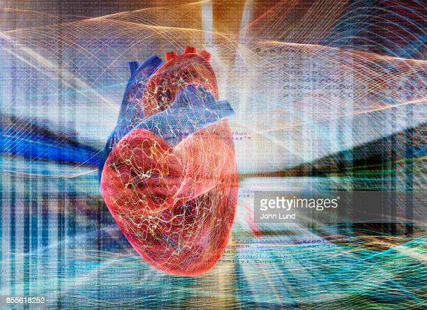 energetic active human heart - human heart stock pictures, royalty-free photos & images