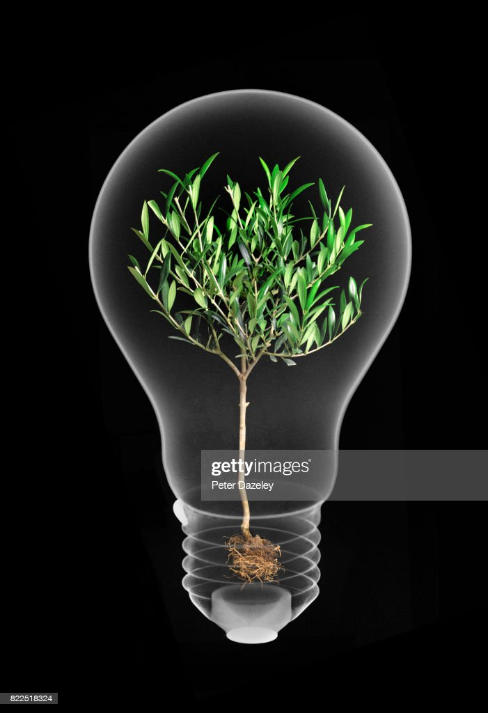 Energy saving lightbulb, alternative energy, green energy : Stock Photo