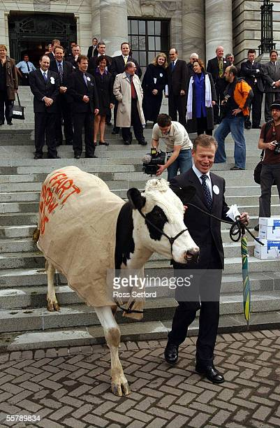 Energy the cow lead by National MP Lockwood Smith down the steps of Parliament Thursday during a protest by farmers against the so called 'fart' tax...