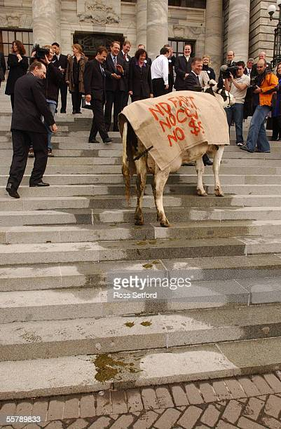 Energy the cow lead by National MP Lockwood Smith leaves her calling card on the steps of Parliament Thursday during a protest by farmers against the...