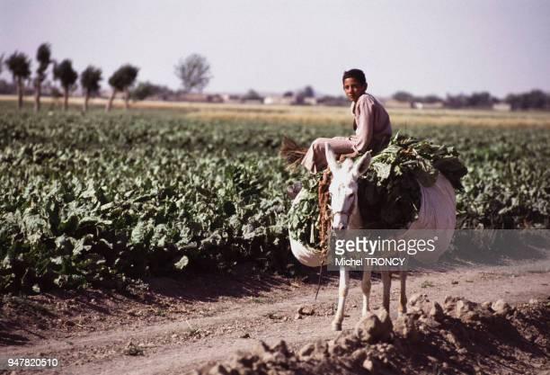 Enfant paysan transportant la récolte sur un âne en Syrie