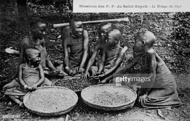 Enfants triant des grains de café au Kenya dans la mission de PP du SaintEsprit