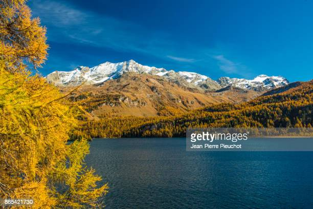 engadine lake and mountains 4 switzerland - european larch stock pictures, royalty-free photos & images