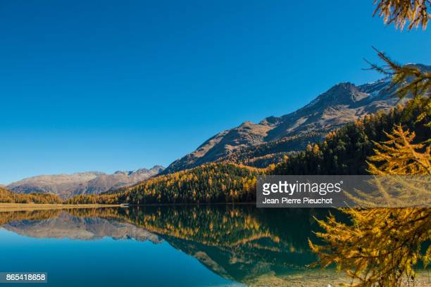 engadine lake and mountains 8 switzerland - european larch stock pictures, royalty-free photos & images
