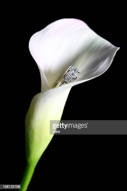 Engagement Calla Lily