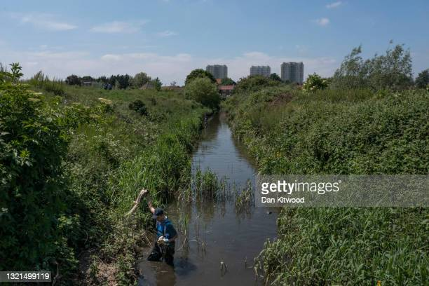 Engagement manager and conservationist Sam Bentley-Toon helps volunteers during a river cleanup, organised by the waterway advocacy group Thames21,...
