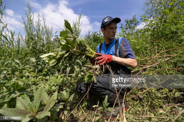 Engagement manager and conservationist Sam Bentley-Toon helps remove Himalayan Balsam during a river cleanup, organised by the waterway advocacy...