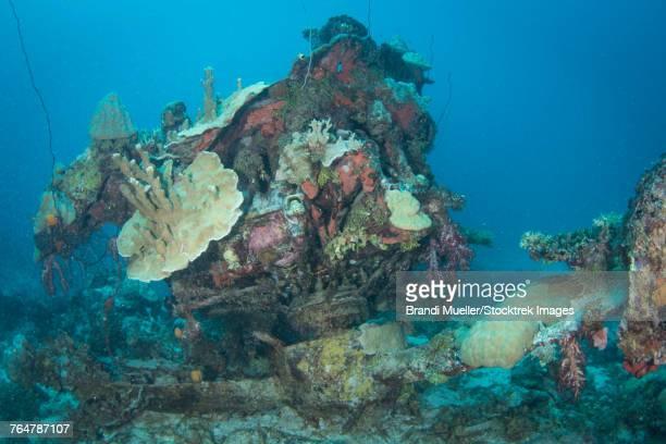engine of the betty bomber airplane wreck, truk lagoon, micronesia. - lagon chuuk photos et images de collection