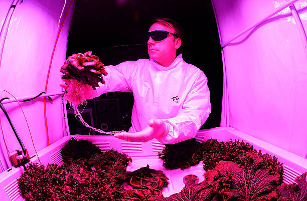 Engineer Daniel Schubert holds lettuce at the German Aerospace Center on July 21, 2014 in Bremen, Germany. Scientists and engineers from the German...