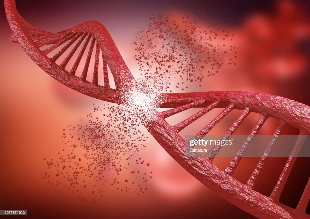 engineering and genetic editing through the Crispr technique. DNA chain breaking down, 3D rendering : Stock Photo