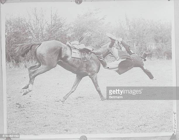 A Nasty Spill In English Steeplechase Mr C F Collins comes a nasty cropper when thrown from his mount Bess in the hussars subaltern point to point...