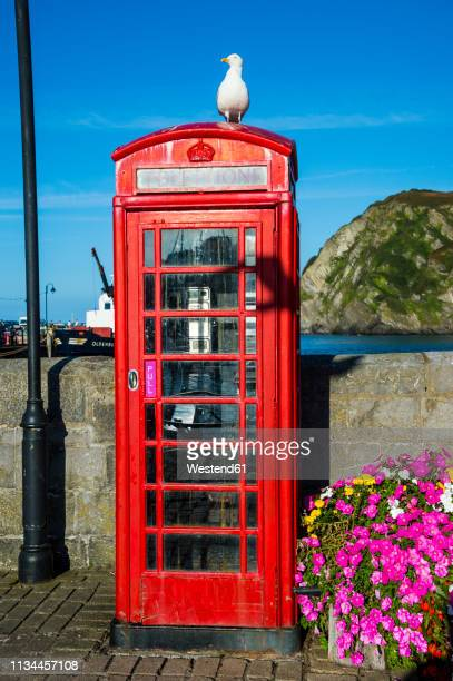uk, england, devon, ilfracombe, seagull sitting on a british telephone booth - ilfracombe stock pictures, royalty-free photos & images