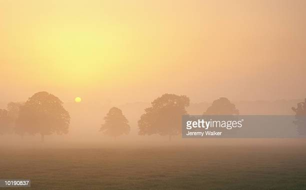 England, Dorset, trees in mist, sunrise