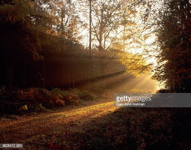 England, Hampshire, New Forest, sunlight falling on woodland path