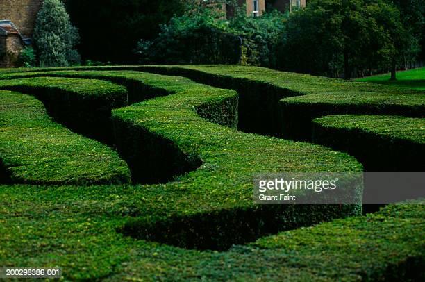 england, london, hampton court, garden maze, summer - hampton court stock pictures, royalty-free photos & images