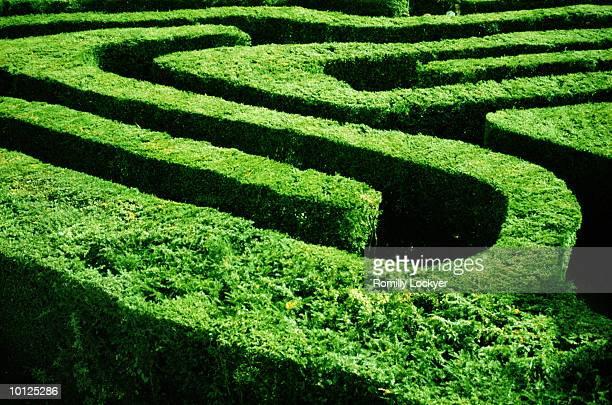 england, london, hampton court maze garden - hampton court stock pictures, royalty-free photos & images