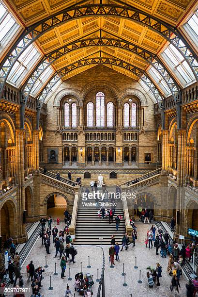 england, london, south kensington - natural history museum london stock pictures, royalty-free photos & images