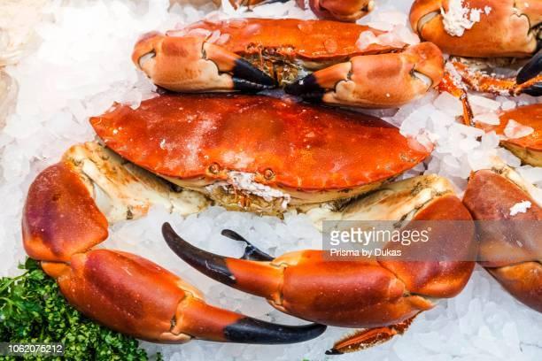 England, London, Southwark, Borough Market, Seafood Shop Display of Crabs