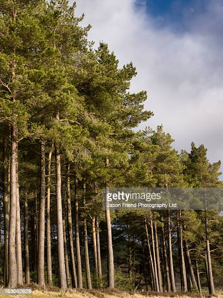 england, northumberland, kielder water & forest. - northeastern england stock photos and pictures