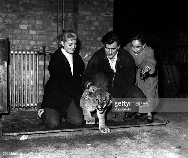 England On the set of the film The Woman for Joe showing LR Diane Cilento George Baker and Jimmy Karoubi with a lion cub