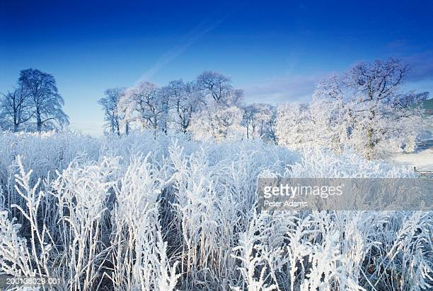 england, somerset, cotswolds, bath, frost covered countryside - イングランド南西部 ストックフォトと画像