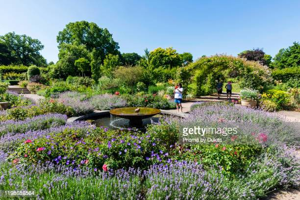England, Surrey, Guildford, Wisley, The Royal Horticultural Society Garden, Flowers in Bloom, 30064283.