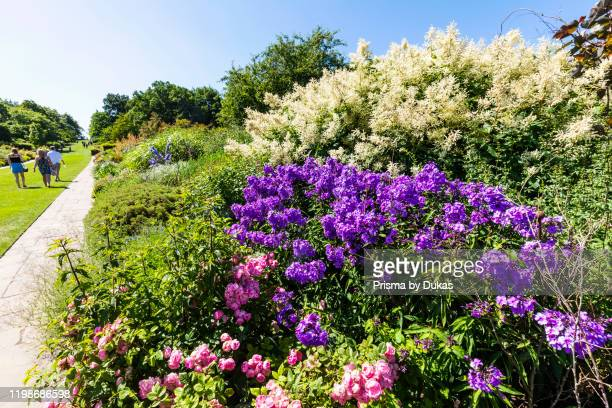 England, Surrey, Guildford, Wisley, The Royal Horticultural Society Garden, Flowers in Bloom, 30064276.