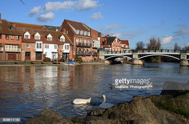 England: Swans in Windsor