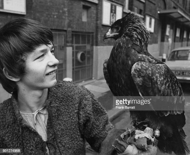 English actor Dai Bradley born David Bradley star of the film 'Kes' with Cindy a Lanner falcon outside the Old Vic in London circa 1970 Both of them...