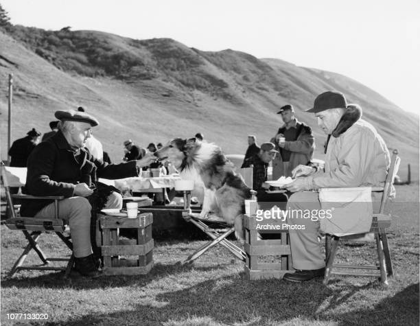 English actor Donald Crisp feeding his co-star Pal between takes during a location shoot of the MGM film 'Challenge to Lassie' in Northern...