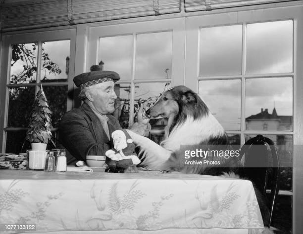 English actor Donald Crisp spends his Christmas with his co-star Pal, who plays Lassie in the MGM film 'Challenge to Lassie', 1948. They are staying...