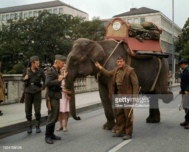 English actor Oliver Reed plays the title role in the war film 'Hannibal Brooks', leading an elephant from the Munich Tierpark to safety, 1969. From...