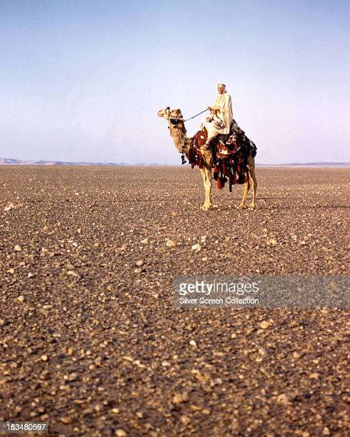 English actor Peter O'Toole as British Army officer T E Lawrence riding a camel in 'Lawrence Of Arabia' directed by David Lean 1962