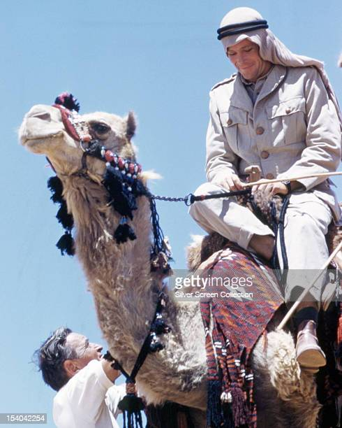 English actor Peter O'Toole as British Army officer T E Lawrence riding a camel in 'Lawrence Of Arabia' directed by David Lean 1962 Lean is pictured...