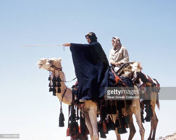English actor Peter O'Toole as British Army officer T E Lawrence, riding a camel next to actor Omar Sharif in 'Lawrence Of Arabia', directed by David...