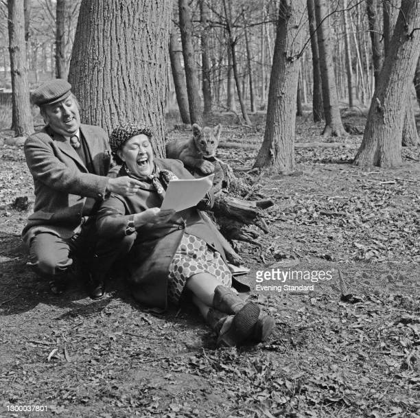 English actors Peggy Mount and Hugh Lloyd read through a script, seemingly unaware of the presence of a lion cub, UK, 2nd May 1972. The two starred...