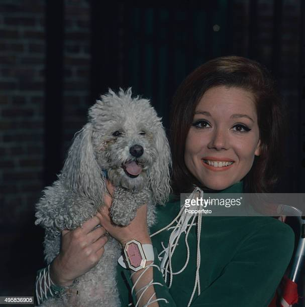 English actress Diana Rigg pictured with her pet poodle in 1967