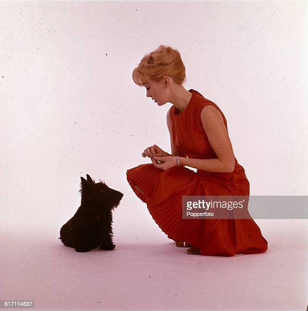 English actress Janette Scott posed wearing a red dress whilst feeding titbits to a small terrier type dog in 1965