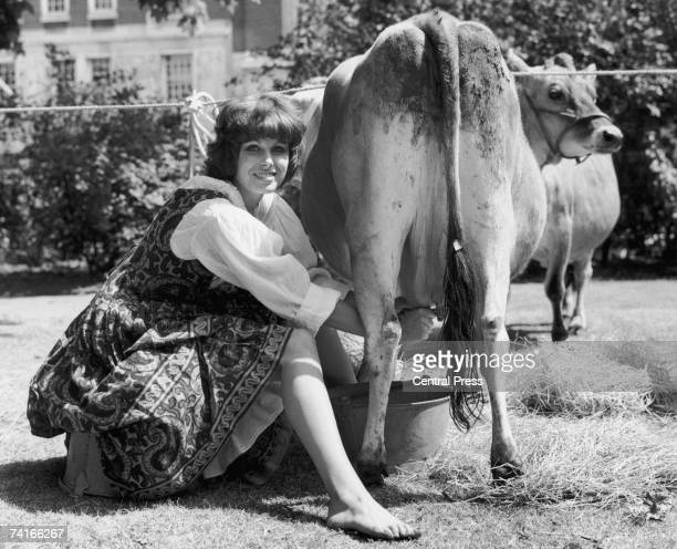 English actress Joanna Lumley milks a cow during the opening of the Midsummer Fair in London's St James' Square 24th June 1975