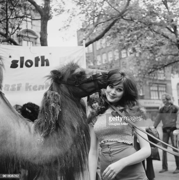 English actress Madeline Smith and Gertie the camel take part in a charity walk in aid of the National Society for Mentally Handicapped Children in...