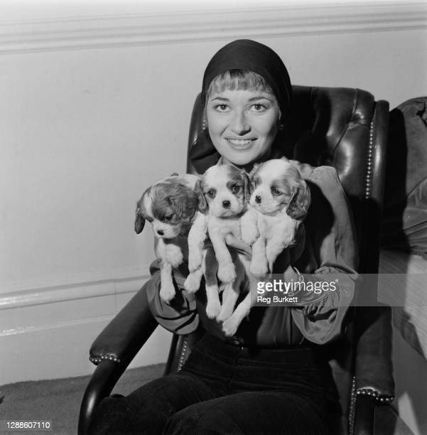 English actress Stephanie Beacham with the three puppies of her Cavalier King Charles spaniel, UK, 7th February 1973.