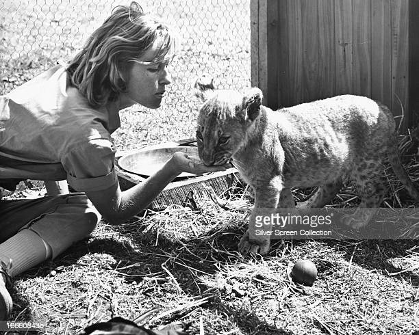 English actress Virginia McKenna as Joy Adamson with a lion cub in 'Born Free' directed by James Hill 1966